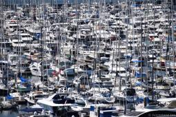 Large Number of Yachts in Seattle