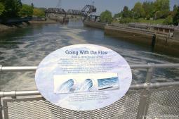 Going with the Flow sign at the Fish Ladder and Hiram Chittenden Locks in Seattle.jpg